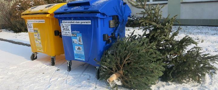 Druhé lednové pondělí začne ve Zlíně sběr vánočních stromků